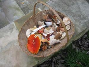 Estate Wild Funghi